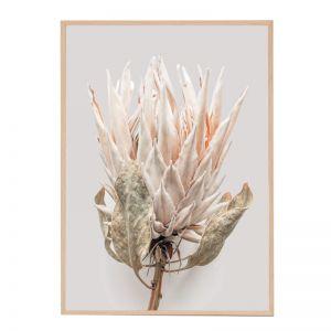 Silvered Protea | Framed Art Print