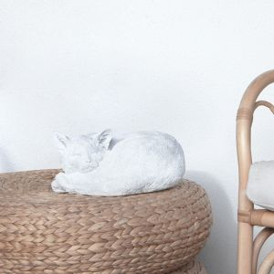 Sleeping Cat | White