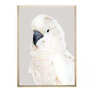 Smokey Wings | Framed Art Print