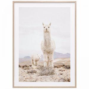 Snow Llama | Framed Print | 41 Orchard