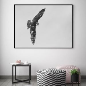 Soaring Black Border | Canvas Wall Art by Beach Lane