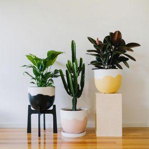 Sorbet Pot | Various Colours | Small