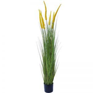 Spear Grass Plant 180 cm