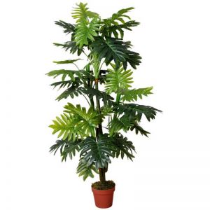 Split Leaf Multi Trunk Philodendron | King Philodendron | 150cm