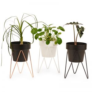 Sprout | Mini Plant Stand