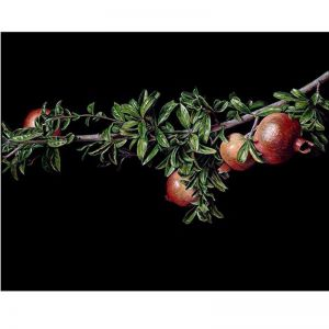 Still Life with Pomegranates | Giclee Art Print by Chris Beaumont