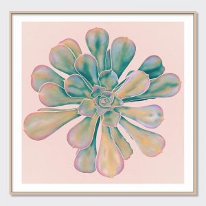 Succulent Bloom on Blush Pink | Aeonium Series II | Fine Art Prints & Canvas