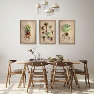 Succulent Study A2 | Set of 3 Art Prints | Unframed