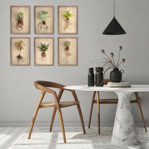 Succulent Study A4 | Set of 6 Art Prints | Unframed