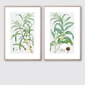 Summer Bloom 1 & 2 Pair | Framed Giclee Art Print