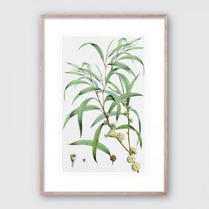 Summer Bloom 1 | Framed Giclee Art Print