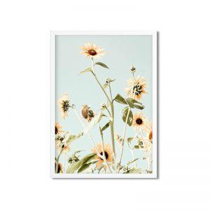 Sunflower Fields   Framed and Unframed Art Print