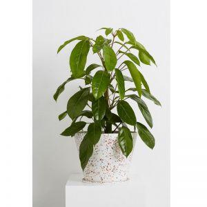 Terrazzo Large Original Pot in Black or White   by Capra Designs