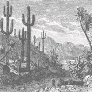 The Oasis Desert Wall - Monochrome