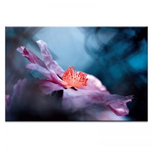 The Truth About Violet | Prints and Canvas by Photographers Lane