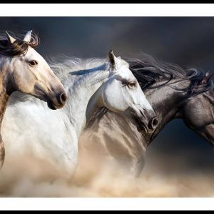 Three Horses With Long Manes   Framed Print by Tusk Gallery