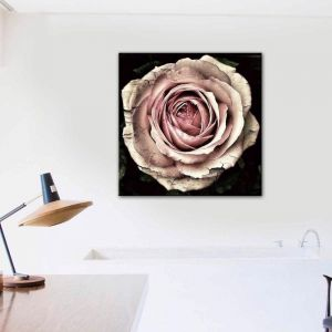 Timeless Rose | Canvas Print by United Interiors