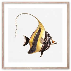 Tropical Fish Collection #7 | Framed Giclee Art Print by Wall Style