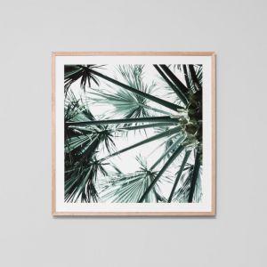 Tropical Garden 2 | Framed Photographic Print