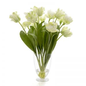 Tulip in Water in Glass Vase | Parrot White