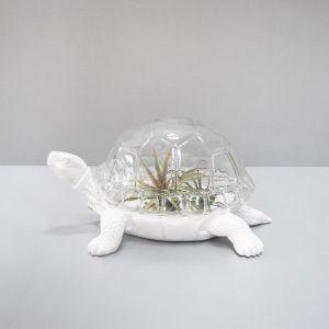 Turtle Terrarium By White Moose