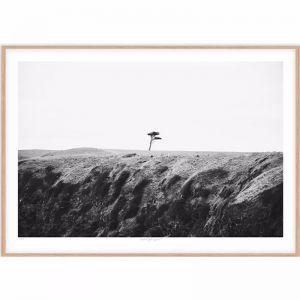 Updraught Cypress | Limited Edition Print by Morgan Henson | By SATARA