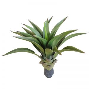 UV Agave 50cm | No Pot