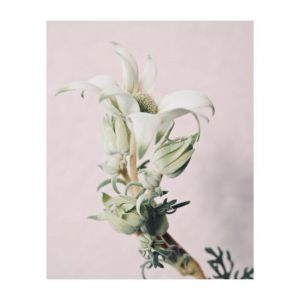 Valerie | Photographic Art Print by Flowers for Kate