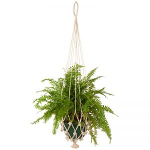 Vibhav | Set Of 4 | Plant Hanger & Pot Holder