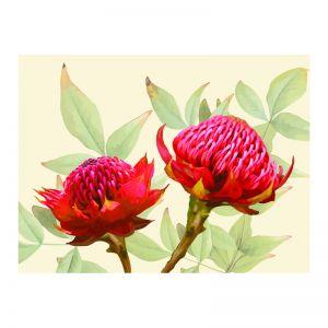 Warratah Bloom | Framed Art Print on Acrylic
