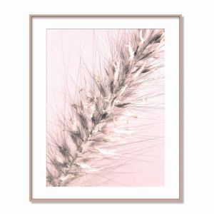 Weed Flower on Blush Pink | Photographic Print & Canvas