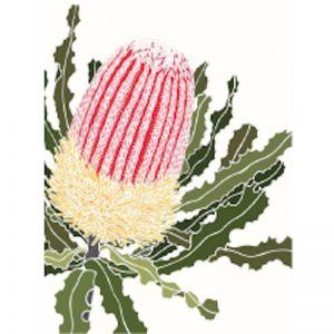 White Banksia Menzies | A4 Print