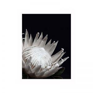 White Protea Poster