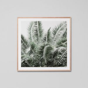 Wild Palms | Framed Photographic Print