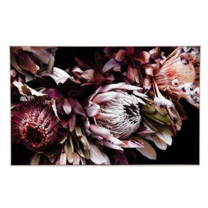 Wine Protea | Framed Canvas Art Print