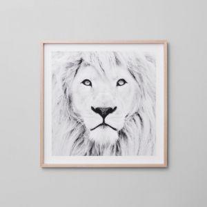 Winter Lion Grey   Framed Print