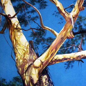 Yellow gum | Original Watercolour Artwork