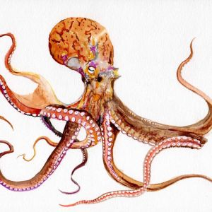 Yellow octopus | Original Watercolour Artwork
