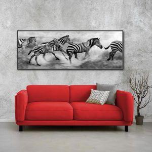 Zebra Crossing Tanzania   Framed Photographic Print on Canvas   2 Sizes