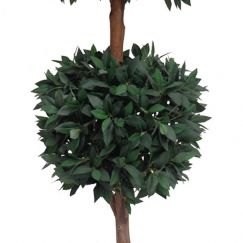 Artificial Bayleaf Ficus Tree   2 Balls   1.82m