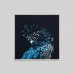 Australian Black Cockatoo | Framed Photographic Canvas Print | by Matthew Thomas