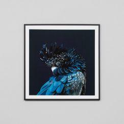 Australian Cockatoo   Framed Photographic Print   By Matthew Thomas