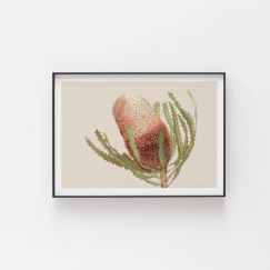 Banksia Native Living Art Flower 1 in Ivory by Pick a Pear | Unframed