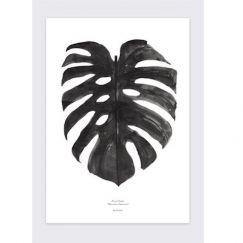 By Garmi Monstera Deliciosa   Black and white print