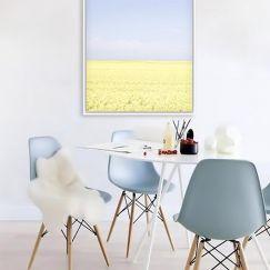 Canola Canvas Print | Framed