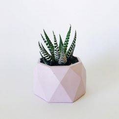 Concrete Planter | Jewel | Blush Pink | by Coral and Herb