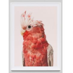 Coral Galah | Photographic Framed Print