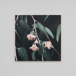 Eucalyptus Blossom | Square Canvas