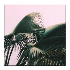 Fern | Prints and Canvas