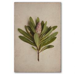 Fynbos Protea | Art print by Natascha van Niekerk | Framed or Unframed